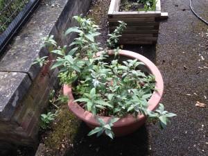bush 2